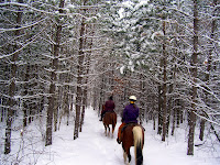 Trail Riding the Horses in Winter