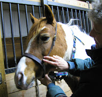 Fitting a Bridle to a Horse: Caveson
