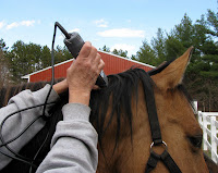 Clipping Horse's Bridle Path