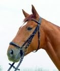 Drop Noseband Image from: http://www.lionhorse.com/product_info.php?info=p182_Bridle--Aktion--Drop-Noseband.html