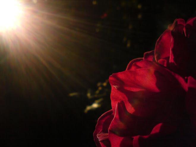 O Sol e a Rosa