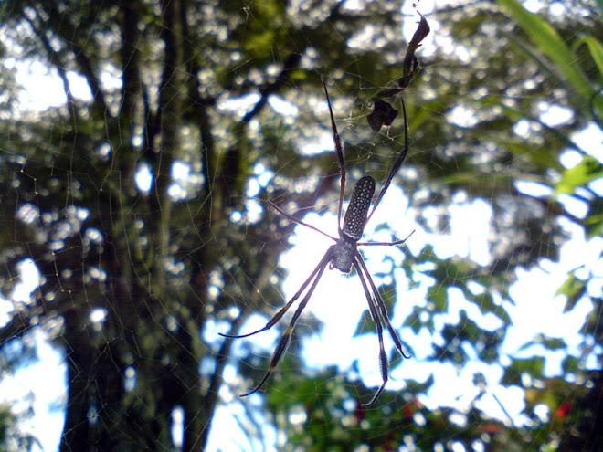 Mais aranha... (flutuando...)