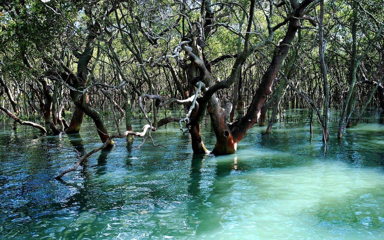 Mangrove Animals Stradbroke Island