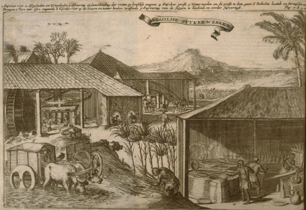 an overview of the book about the history of sugar production The william l clements library houses original resources for the study of american history and culture from the fifteenth to the early twentieth century clements university of in the nineteenth century, grenada and trinidad were added to the empire sugar dominated production on the.