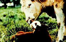 Maltrattamento animale