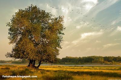 Photoworks by Denis Bogomolov