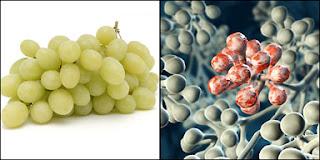 Ini Dia 9 Bahan makanan Yang Mirip Organ Tubuh
