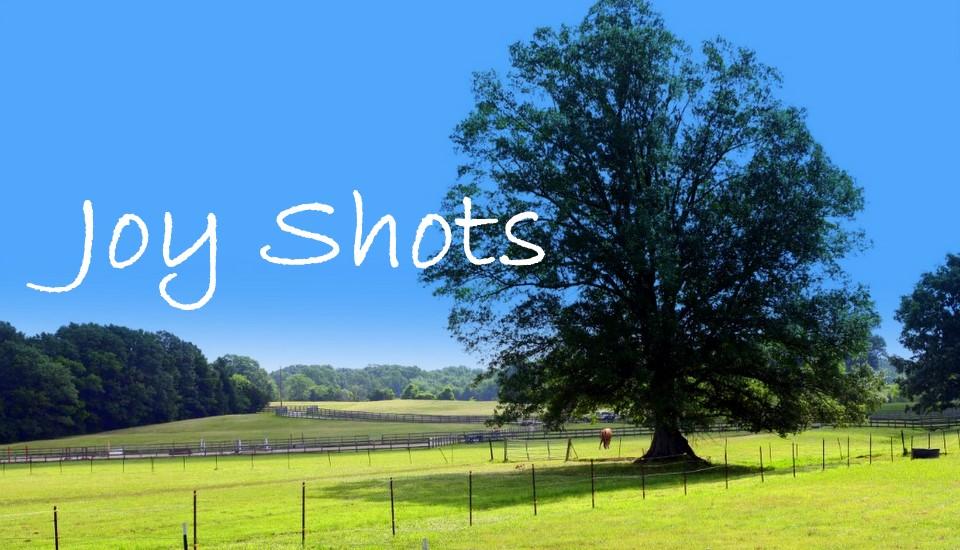 Joy Shots