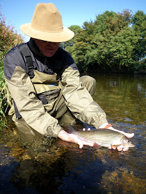 Flies by Iain Barr Fly Fishing 4 stunning River Balloon Caddis Grayling//Trout