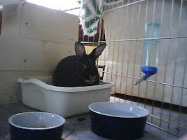 Bunny in Litter Box