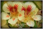 Blomster til bloggvenner