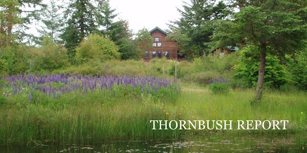 thornbush report