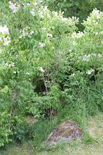 En del av vår trädgård