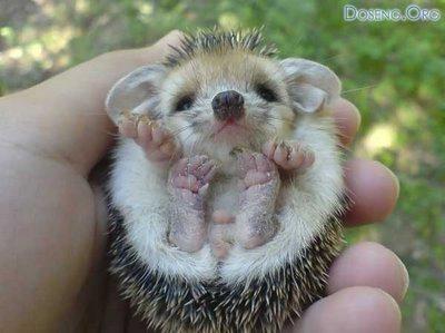 Los billetes más bonitos del mundo MSN com - fotos de los animales mas bonitos del mundo