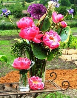 grace peony pink hawaiian coral in a vase at peony farm wa - How To Cut Peonies