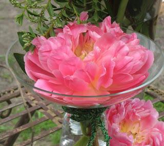 Peony Pink Hawaiian Coral floating in a vase, Peony Farm, WA