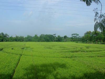Foto Crop Circle Di Yogyakarta