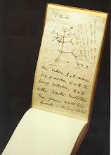 Árvore da Evolução
