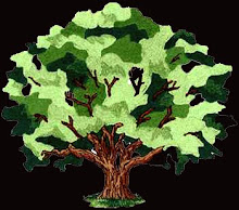 Já plantou uma árvore?