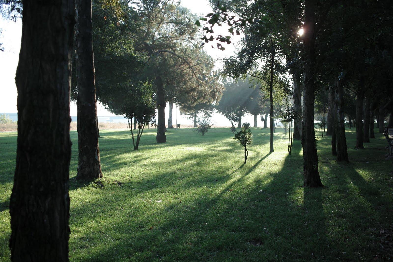 sunday morning walk in the park