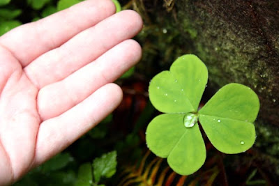 Isn't this clover huge? It's almost as big as my palm!