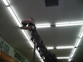 Wyoming Geology Museum apaposaurus