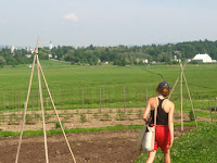 Middlebury College Organic Garden in Vermont for Renee's Garden Seeds