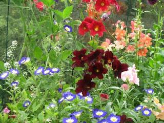 colorful planted flower combinations