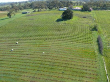 Aerial view of the vineyard
