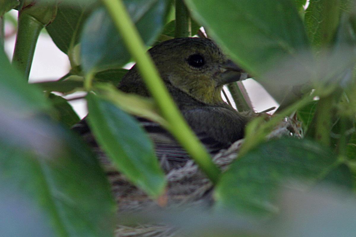 [mama+bird.jpg]