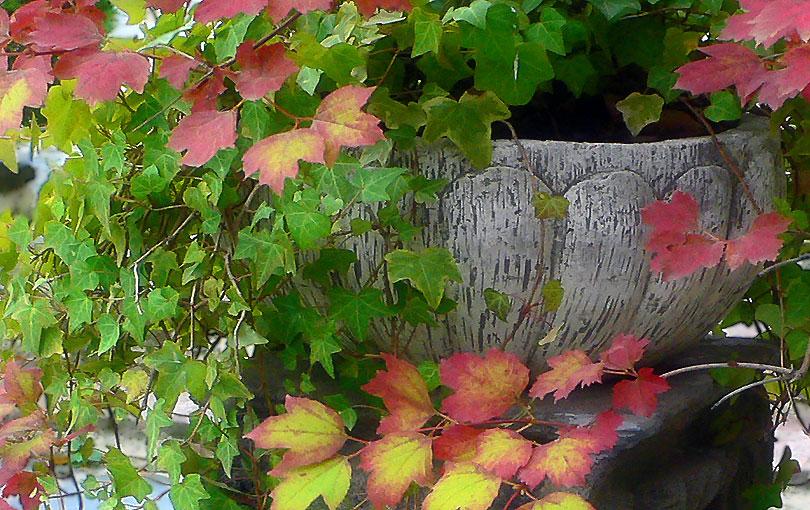 test tiesto flowerpot tardo otoño autum flors flores flowers fulles hojas