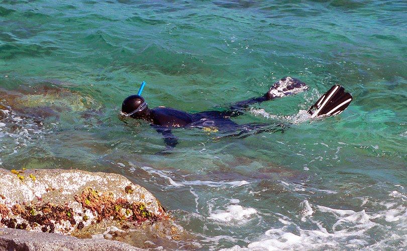 submarinista especie marina mar playa verano pescar marine species diver sea beach summer fishing estiu