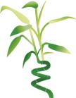 Sticker bambou idzif.com