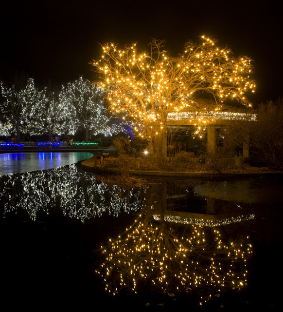 Ken Papaleo: X Marks The Shot: Blossoms Of Lights, Botanic