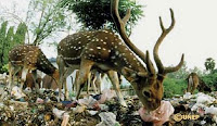 http://3.bp.blogspot.com/_Ao_pNTaPahI/SYdGFaD84VI/AAAAAAAAABM/pyHTbOwGGW8/s200/Deer+in+India+eating+plastic+bag.jpg
