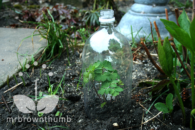 how to make a garden cloche from recycled plastic soda bottle
