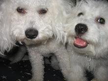 Sherbie & Gelato