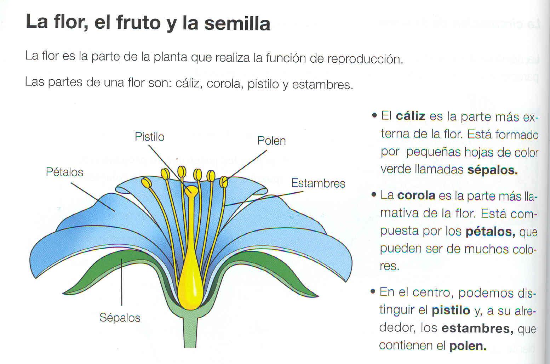 los de primer ciclo: 2ºB examen Las Plantas: 9 junio de 2010