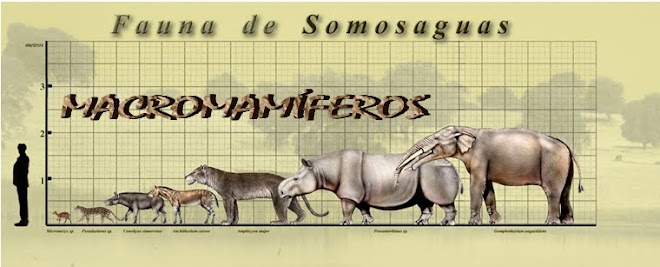 EQUIPO DE MACROVERTEBRADOS