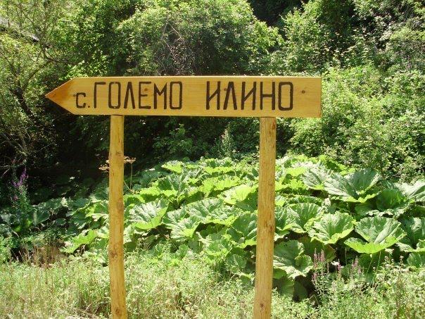 GOLEMO ILINO