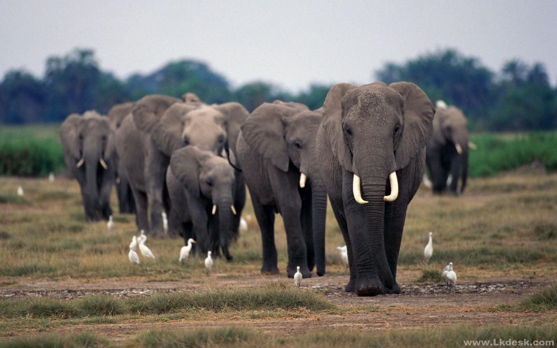 elefanten 22