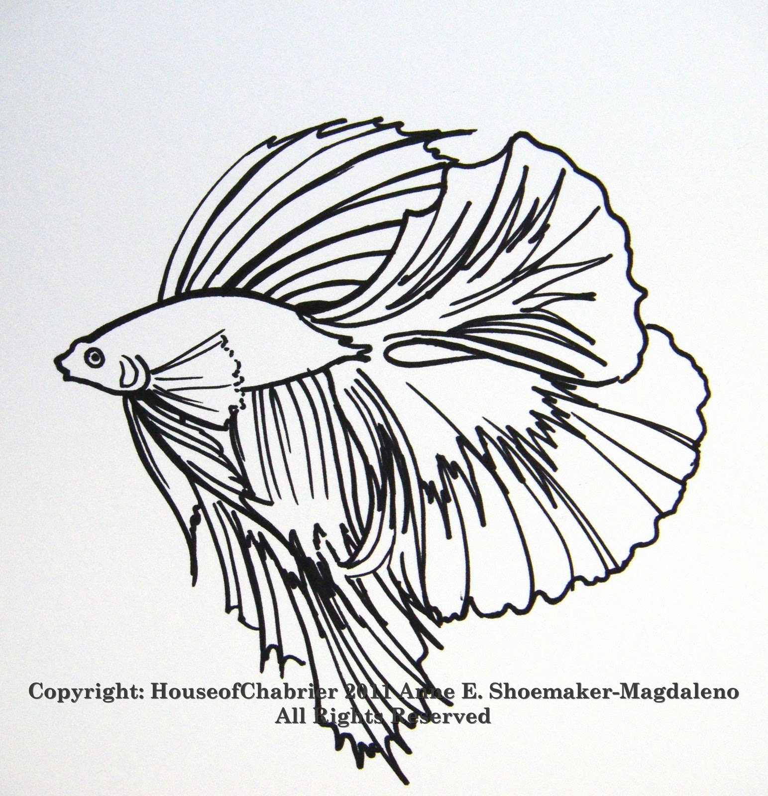 95 ideas Betta Fish Coloring Pages on wwwgerardduchemanncom