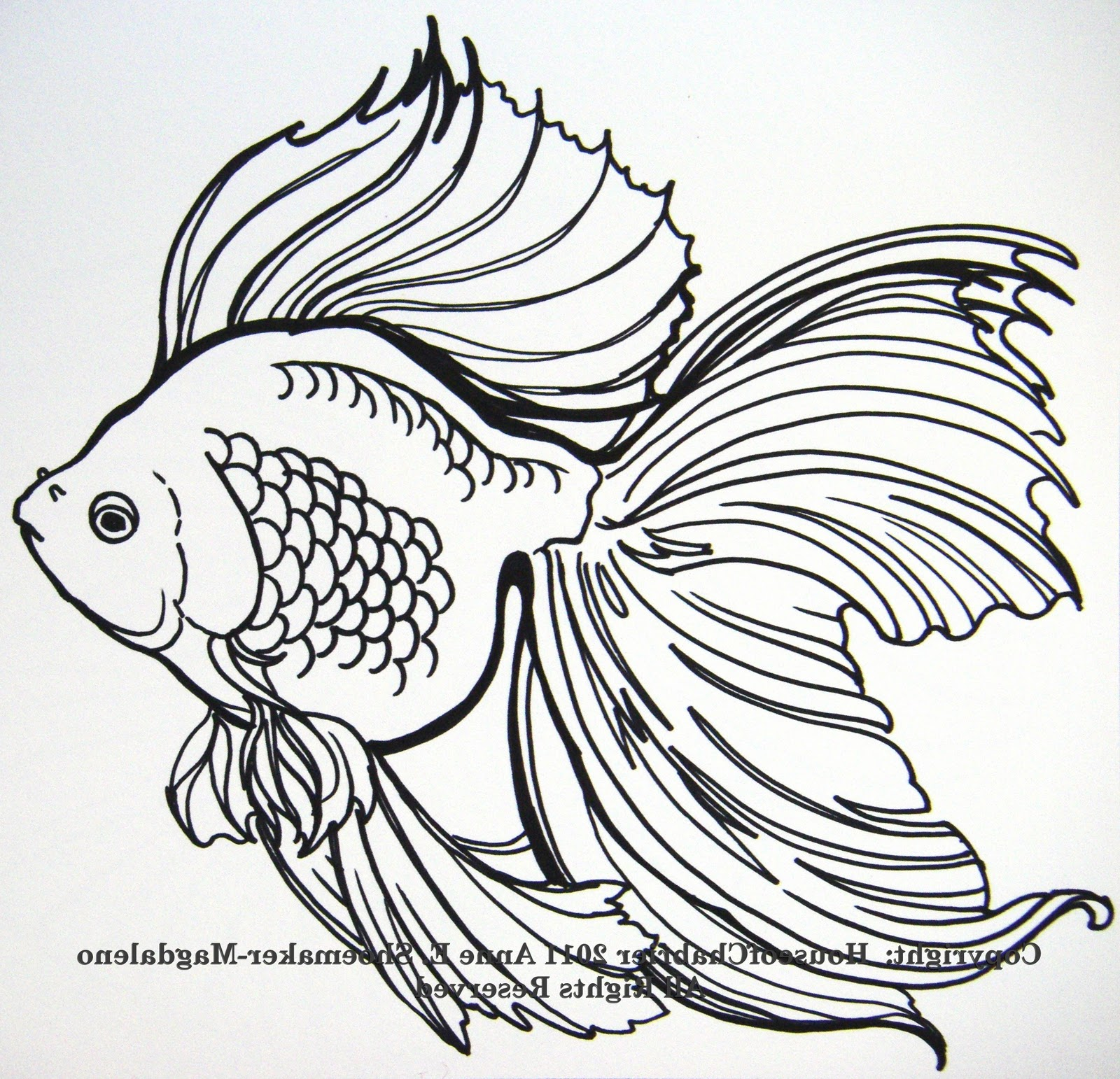 Line Drawing Of Fish : Annie s current paintings tnna needle point orders