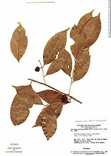 LAUR-kubi-mezi-1654624.jpg