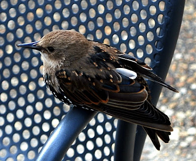 bird on a chair in Washington DC