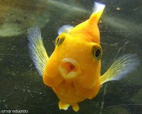Picture of a Fish