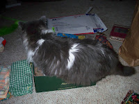 Annie, yet another try into the shoe box