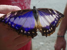 Butterfly in Costa Rica