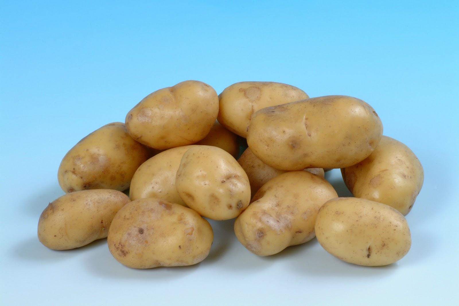 Сорт картошки на украине