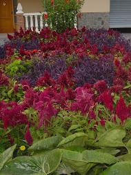 ¡¡Bonito jardín!!